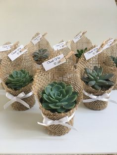 Succulent Favors Wrapped in Burlap by CandSBoutiqueShop on Etsy