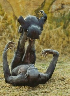 Primates are just like us :-}
