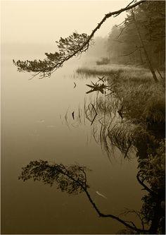 Silent Reflection - Sergei Mariskin