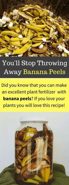 Using Banana Peels in the Garden for Fertilizer and Pests | Balcony Garden Ideas #gardeningorganic