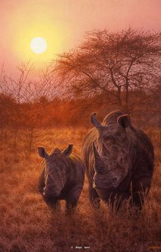 RISING SON -Brian Jarvi Art Big Five Series of African Wildlife Artist Brian Jarvi - the Big Five SeriesBrian Jarvi