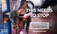Stop animal abuse...