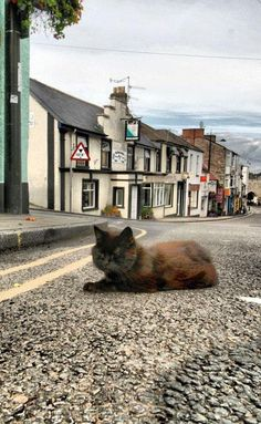 Chepstow pub to hold wake for Alfie, the much-loved town cat (From South Wales…