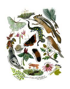 Flora y Fauna de la impresión de Giclee de Midwest: 11 x 14