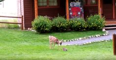 Real Life Bambi And Thumper Meet And It's Love At First Sight! | The Animal Rescue Site Blog