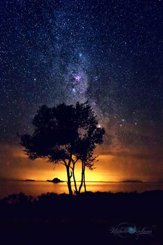 ~~The Tree by the Sea • starry night sky, Mackay, Australia • by Questavia~~ Starry Night Sky, Night Skies, Nature Pictures, Beautiful Scenery Pictures, Cool Photos, Natural Phenomena, Beautiful Sky, Beautiful Places, Book Covers
