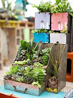 Thrift store junk turns into whimsical succulent planters at this Austin nursery.