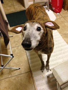 Eared Snood for Greyhounds Assorted Colors   by PURPLEGREYHOUND