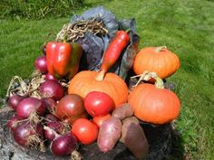 Grow and eat colorful vegetables and fruit for a range of health benefits! Home Grown Vegetables, Growing Vegetables, Fruits And Vegetables, Veggies, Colorful Vegetables, Steamed Asparagus, Fresh Asparagus, Roasted Root Vegetables, Old Farmers Almanac