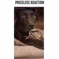 His reaction is priceless 😂 Cute Funny Dogs, Funny Dog Memes, Funny Dog Videos, Really Funny Memes, Funny Animal Memes, Cute Funny Animals, Funny Animal Pictures, Pet Videos, Animal Jokes