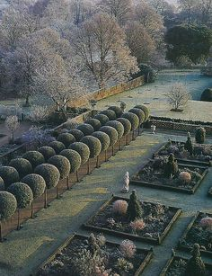 Lady Salisbury's Quercus ilex avenue covered in a hoar frost at Hatfield Palace. Photography by Jerry Harpur