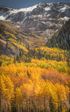 ~~Stairway To Heaven ~ autumn colors, Ouray, Colorado by Valerie Millett~~