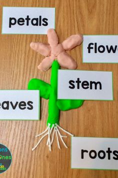 Flower Science Experiments & Parts of a Flower Activities - Lessons for Little Ones by Tina O'Block Science Experiments Kids, Science For Kids, Spring Activities, Preschool Activities, Kids Art Galleries, Preschool Garden, Kindergarten Art Projects, Parts Of A Flower, Projects For Kids