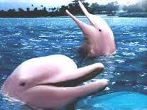 animales en peligro de extinción. Delfín
