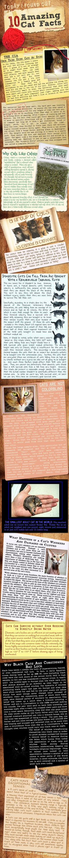 Amazing Cat Facts (infographic) #cats #amazing #facts #infographics