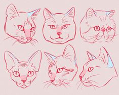 Animal Sketches, Animal Drawings, Art Sketches, Art Drawings, Draw Cats, Art And Illustration, Cat Drawing Tutorial, Cat Anatomy, Nature Sketch