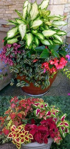 How to create beautiful shade garden pots using easy to grow plants with showy foliage and flowers. And plant lists for all 16 container planting designs! - aPieceofRainbow.com #gardeningwithcontainers