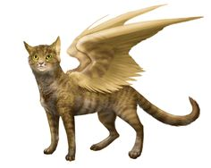 Vili, my cat ^^
