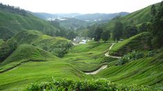Pretty nice 44 Beautiful Cameron highland Photos in Malaysia Check more at http://dougleschan.com/the-recruitment-guru/cameron-highland/44-beautiful-cameron-highland-photos-in-malaysia/