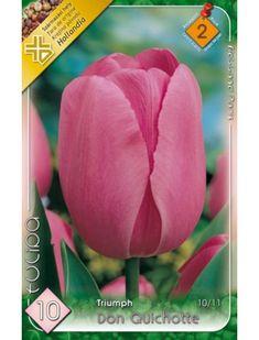 Triumph-típusú tulipán 'Don Quichotte' Triumph, Rose, Flowers, Plants, Tulips, Don Quixote, Pink, Plant, Roses