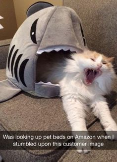 Pets Tips : Funny CATS guaranteed to make you laugh Funny cat compilation Funny Animal Jokes, Funny Cat Memes, Funny Animal Pictures, Animal Memes, Funny Animals, Funny Humor, Animal Pics, Funny Cat Pics, Funny Photos