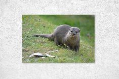 an otter sticking its tongue out Otters, Etsy Store, Wildlife, Art Print, Digital, Shop, Animals, Otter, Animaux