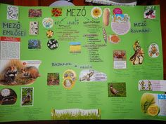 Marci fejlesztő és kreatív oldala: Mező életközössége 2. osztály Teaching, School, Gold, Projects, Education, Onderwijs, Learning, Yellow, Tutorials