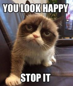 Vee~, give me-a a hug grumpy cat! *cuddles with grumpy cat* Grumpy Cat Quotes, Funny Grumpy Cat Memes, Funny Animal Memes, Funny Animal Pictures, Funny Cats, Funny Animals, Cute Animals, Gato Grumpy, Grumpy Kitty