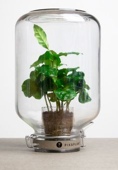 Pikaplant creates self-watering systems for automatic plant maintenance.