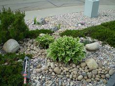 captivating low maintenance front yard landscape ideas photo