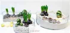 Oggi creeremo un picccolo giardino Zen all'interno di un vaso di vetro . Materiale: vaso vetro, spugna secca, sabbia bianca in due sfumature, sassolini decorativi della stessa tonalità della sabbia, sassi dal sapore desertico, sfere colorate, candele, bulbi in vasetti.