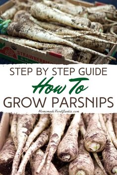 Parsnips are a root crop and they are hugely under utilized by many. Sweet and nutty in flavor they are great in soups or roasted as a side dish. Gardening For Beginners, Gardening Tips, Vegetable Gardening, Growing Parsnips, Garden Guide, Garden Features, Easy Garden, Raised Garden Beds, Fruit Trees