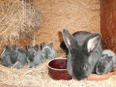 první králíčci....