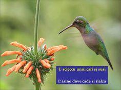 Vi suggerisco alcuni proverbi palermitani inseriti su immagini di splendidi uccelli e con un po di musica per allietare ludito...
