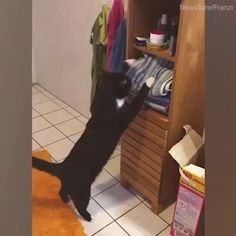 New funny cute cats kittens kitty ideas Funny Cute Cats, Cute Cats And Kittens, Cute Funny Animals, Cute Baby Animals, Cool Cats, Kittens Cutest, Cute Animal Videos, Funny Animal Pictures, Gato Gif