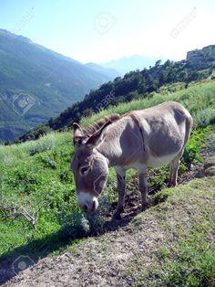 http://www.123rf.com/photo_19112653_donkey-near-fort-marie-christine-french-savoy.html