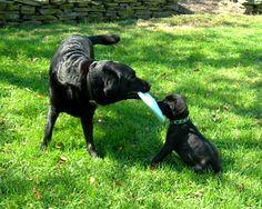 Best Friends Bella & Oakley