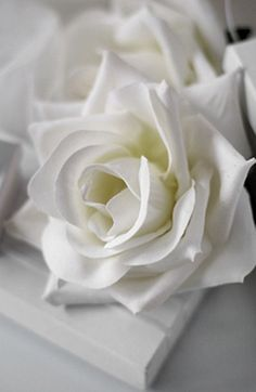 Color Blanco - White!!! white roses