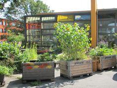 Der Neubau mit dem Pflanzenatelier und dem Hochbeetgarten davor