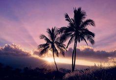 Hvor går din næste rejse hen?  I månedens ELLE guider vi til ferieparadiset Maui på Hawaii hvor du kan komme tæt på havskildpadder krystalklart vand hvide sandstrande og magiske massagehænderWhat's not to like? #ELLEapril #ELLErejser #travel #maui #hawaii Foto: Anette Kirstine Poulsen @beautyspace  via ELLE DENMARK MAGAZINE OFFICIAL INSTAGRAM - Fashion Campaigns  Haute Couture  Advertising  Editorial Photography  Magazine Cover Designs  Supermodels  Runway Models