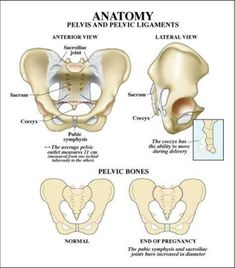 Anatomy of Pelvis and pelvic ligaments