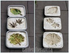 Leaf Imprint Concrete Stepping Stones - Get the DIY from Garden Therapy