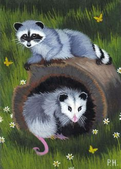 ACEO, PRINT, RACCOON,  OPOSSUM, BUTTERFLY, FLOWERS