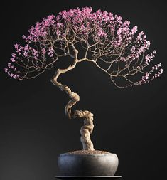 he word bonsai is most closely associated by most with the growing of miniature trees, and although this is somewhat accurate, there is a lot more to it than that. A bonsai is not a genetically overshadowed plant