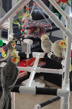 DIY: PVC home build bird play gym.