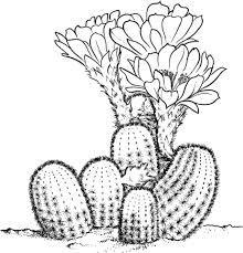 Resultado de imagen de cactus dibujos