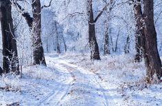 winter photos free   Winter Landscape Free Stock Photo - Public Domain Pictures