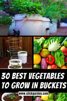 Raised Garden Beds Discover 30 Best Vegetables To Grow In Buckets - Grow Veggies in containers 30 Best Vegetables To Grow In Buckets - Grow Veggies in containers. Here are 30 best vegetables and herbs that grow best in buckets pots and containers. Growing Vegetables In Containers, Growing Veggies, Container Gardening Vegetables, Growing Plants, Permaculture, Broccoli Plant, Gemüseanbau In Kübeln, Composting At Home, Growing Ginger