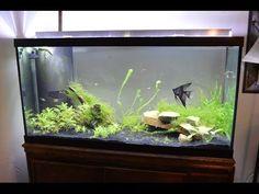 DIY LED Planted Aquarium Grow Light making - YouTube