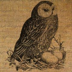 down load sheet transfer $1.00 Burlap Owl, Just For Gags, Decoupage, Us Images, Hang Tags, Digital Collage, Collage Sheet, Digital Image, Tea Towels